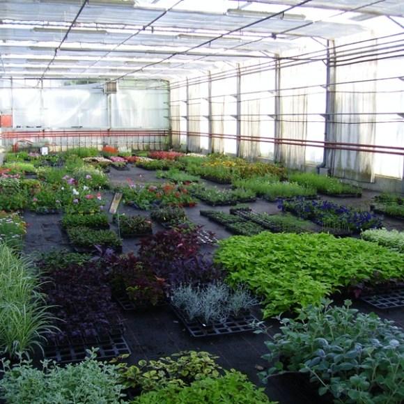 Plantes pour jardinières
