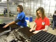 Cindy et Maurine remplissent les plaques alvéolées