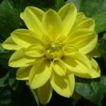 Mots croisés des fleurs
