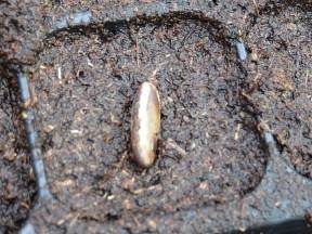 semis terreau