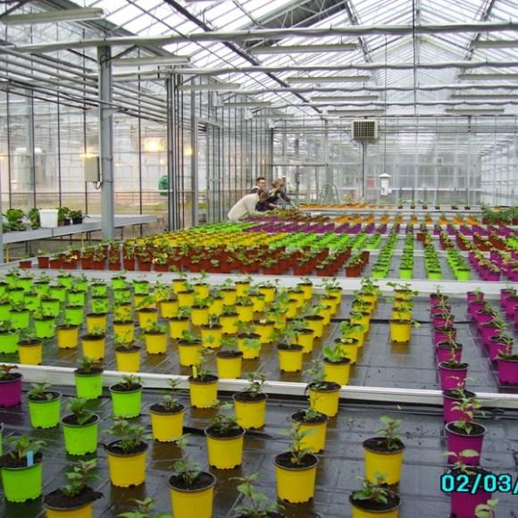 Une serre colorée grâce à ses pots de couleurs