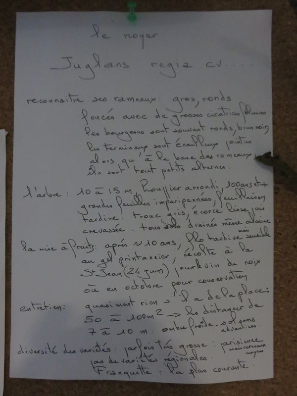 Description Noyer