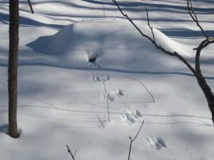 tracks and hole