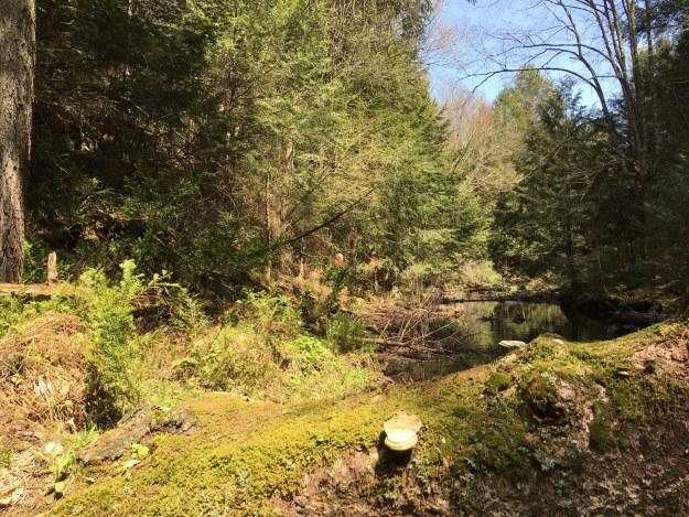 otis-state-forest-2
