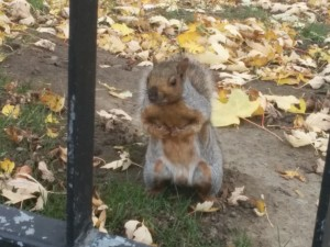 Random squirrel posing at McGill university. Photo taken by Yours Truly.