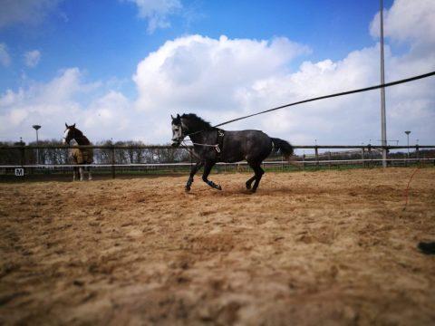 Week vol paarden!