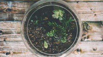 Use a terrarium to grow plants