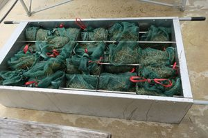 Preparing substrate for mushroom production
