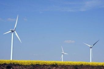 Windkraftanlagen entlang der Autobahn 14 zwischen Dresden und Leipzig - Foto: Norman Schiwora
