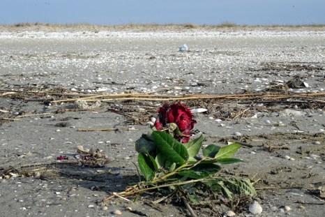 """Rote Rosen in kleinen Sträußen, werden bei Seebestattungenen gerne als """"Grabschmuck"""" ins Wasser gegeben."""