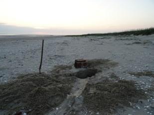 Grab der beiden Seehunde bei den Dünen