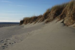 Südwestdüne nochmals vom Strand (Foto: Tore J. Mayland-Quellhorst).
