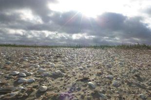 Sonnenstrahlen über Muschelschill (Foto: Tore J. Mayland-Quellhorst).