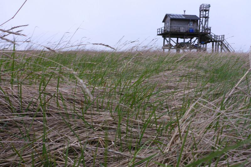Das Gras wächst, die Insel wird wieder grün (Foto: Tore J. Mayland-Quellhorst).