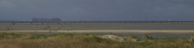 Weißwangengänse (Branta leucopsis), auch Nonnengänse genannt, ziehen über die Düne (Foto: Tore J. Mayland-Quellhorst).