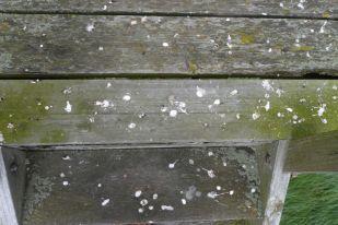 Die Treppe nach kurzer Rast eines Starenschwarms… (Foto: Tore J. Mayland-Quellhorst).