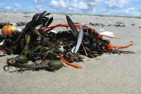 Strand-Stillleben aus Tang, Seil, Federn und Apfel (Foto: Tore J. Mayland-Quellhorst).