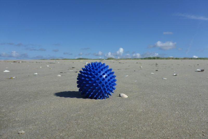Seeigel der anderen Art am Strand von Trischen (Foto: Tore J. Mayland-Quellhorst).