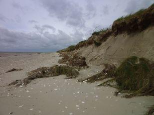 S-Düne wieder Kliff (Foto: Tore J. Mayland-Quellhorst).