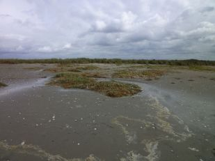 Salzmiereninseln platt und SW-Düne überspült (Foto: Tore J. Mayland-Quellhorst).