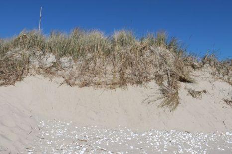 wachsende Düne (Foto:A. de Walmont)