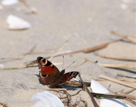 Strandausflug (Foto: A. de Walmont)