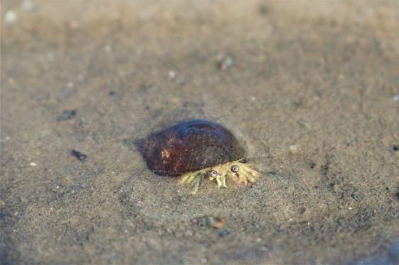 Vergraben im Sand (Foto: A. de Walmont)