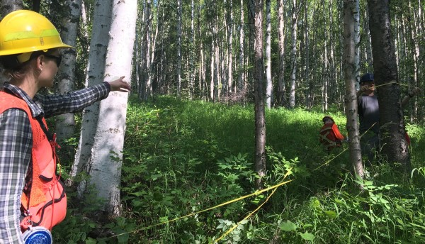 Taking Measure of a Remote Slice of Alaskan Forest – NASA ...