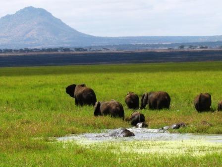 Elephants wallowing in Silale Swamp