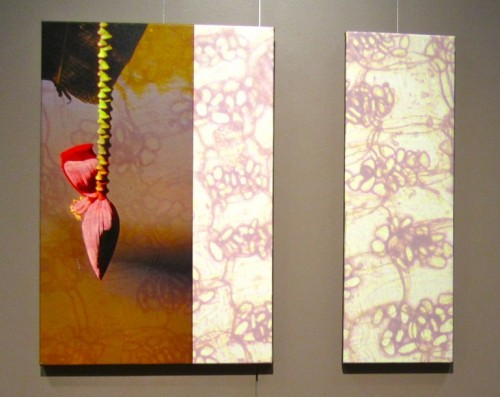Two views of a banana bloom - Dr. Terry Ashley.