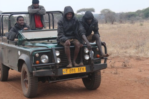 A couple of Hadzabe trackers scan the transect for carnivore tracks.