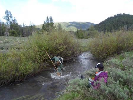 Measuring stream substrate by doing a pebble count