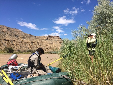 Taking width measurements on the White River