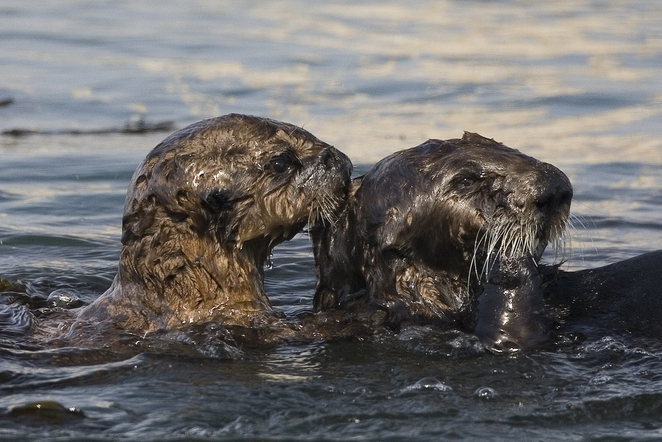 Image result for images of oil spill wildlife