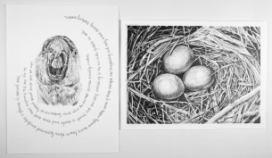 """Nesting #2, graphite on paper 30"""" x 22"""". 2018 , $600 without frame, $750 with frame"""