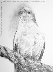 """Nesting #9, graphite on paper, 9"""" x 12', 2019, $250 without frame, $300 with frame"""