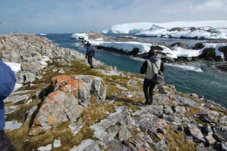 Trying to keep up with the birders. Note the vegetation! I was surprised to find Antarctica is not just ice ans snow.