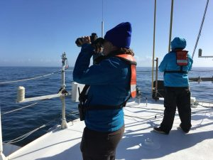 Surveying the horizon for marine mammals and seabirds