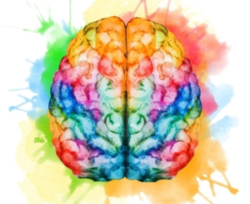 Watercolor of human brain