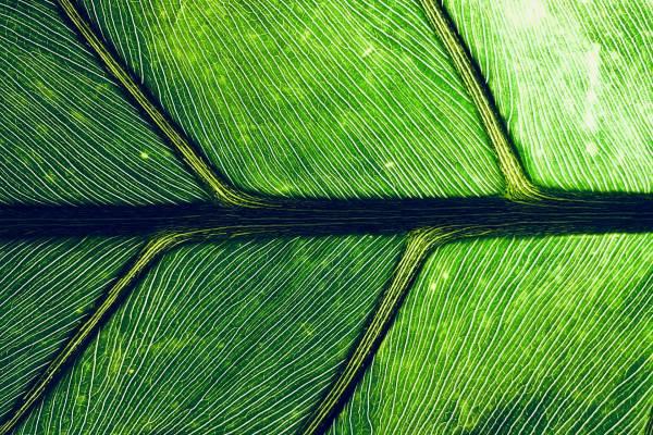 Macro Leaf@1x.jpg