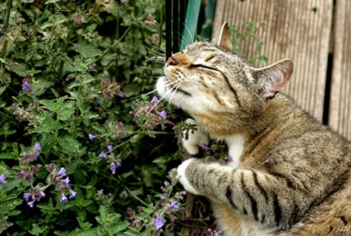 catnip-banned-uk