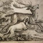 deer-hunted