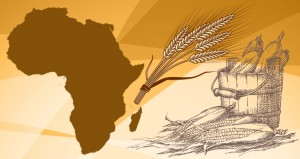 A Princeton University research team has created a readily transferable method for conservation planners trying to anticipate how agriculture will be affected by such adaptations. The tested their model by studying wheat and maize production in South Africa. (Image source: WWS)