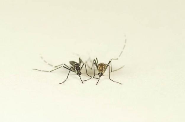 2014_11_12_Mosquito1