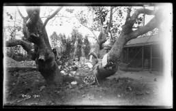 Xmas 1901
