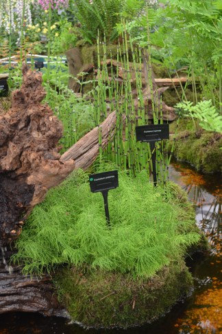 I spend my time trying to eradicate Equisetum but sometimes its worth planting