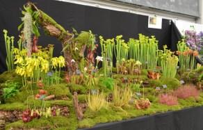 Hewitt-Cooper Carnivorous Plants