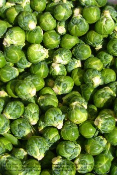 Day 24 - Brussels sprout