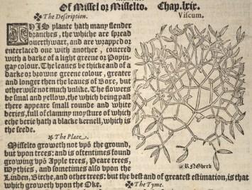 Day 2 - Viscum album in Lyte's Herball of 1578