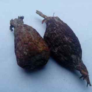 what Nigerians call Alligator pepper